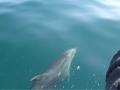 10 Delfine auf unserem Weg zur Arbeit (2)