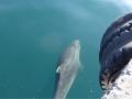 09 Delfine auf unserem Weg zur Arbeit