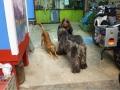 06 Unsere Wachhunde in der Villa